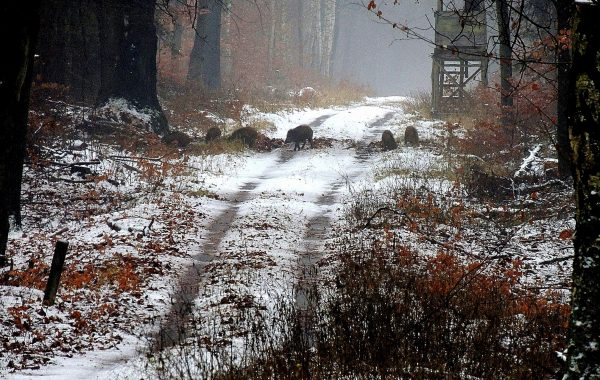 Jagdbare Tiere
